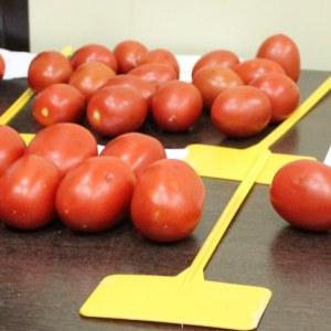Tomates-pera-300x300