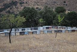 La sequía nos deja sin miel