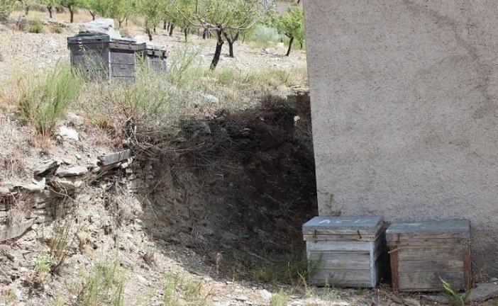 Los apicultores buscan estrategias de lucha frente a la Varroa