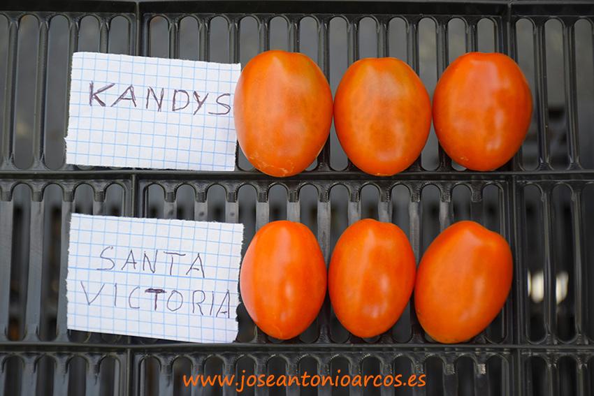Kandys-y-Santa-Victoria)