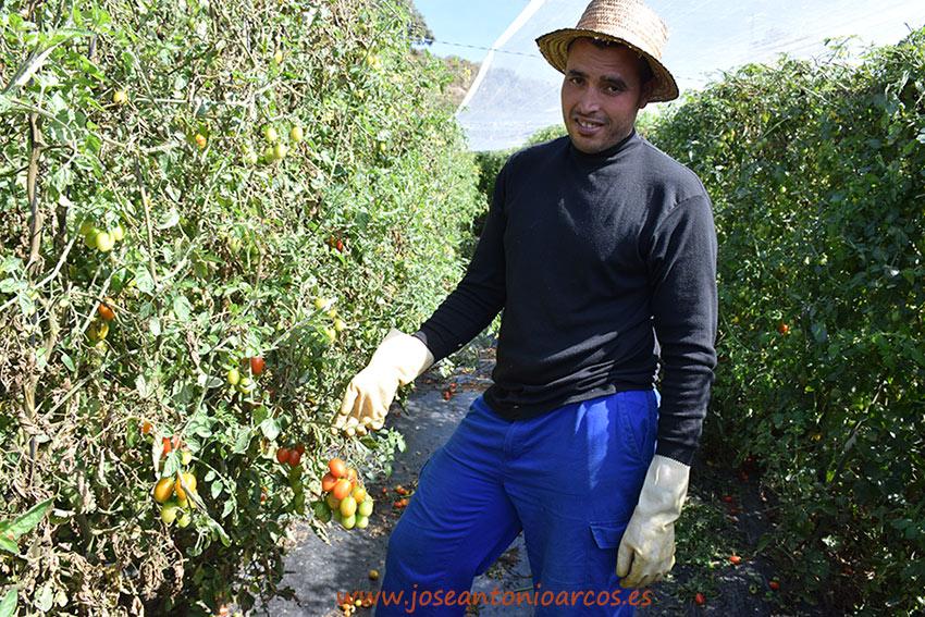 Peón-agrícola2