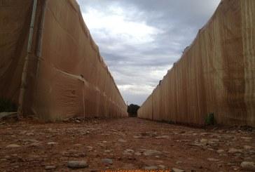Agadir cultiva la mitad de tomate que Almería