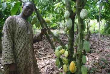 Plan África: la industria auxiliar mira hacia Camerún y Nigeria