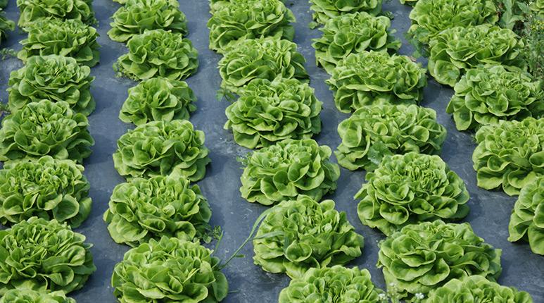 tuotteet_bioskakalvot_maatalouskalvot web www.plastiroll.fi