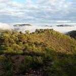 La biomasa en los bosques valencianos