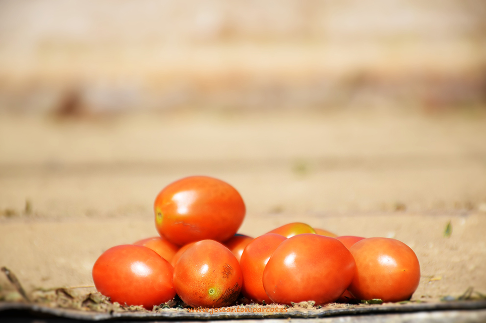 (Vídeo) Daños del granizo en una finca de tomate en la Alpujarra de Granada