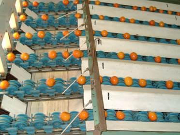 Tecnova evita el daño de frutos en el lineal del manipulado