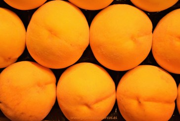 Anecoop capta nuevos socios catalanes para crecer en fruta de hueso