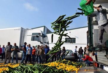 (vídeo + álbum fotográfico) Los agricultores arrojan al suelo las hortalizas que el mercado compra a bajo coste