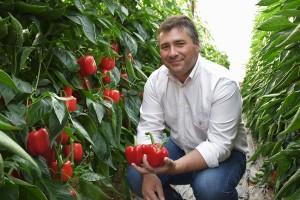 Gines-con-Arnon pimiento california rojo para cultivo en invernaderos de Almería