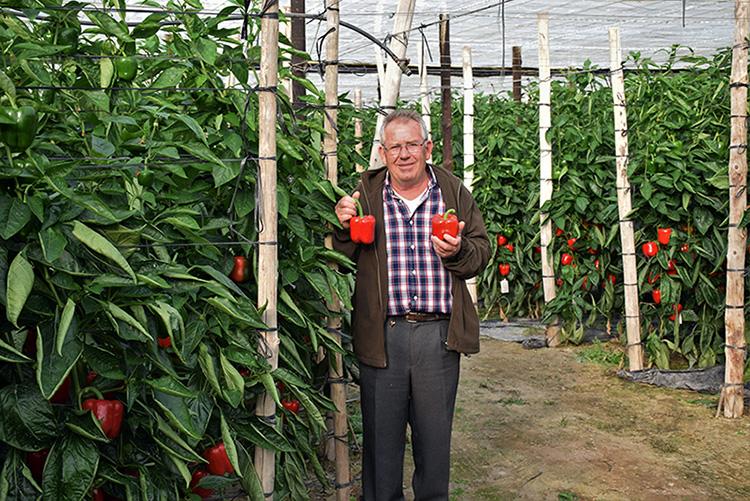 Juan, agricultor de Balerma, con pimientos de Top Seeds Ibérica