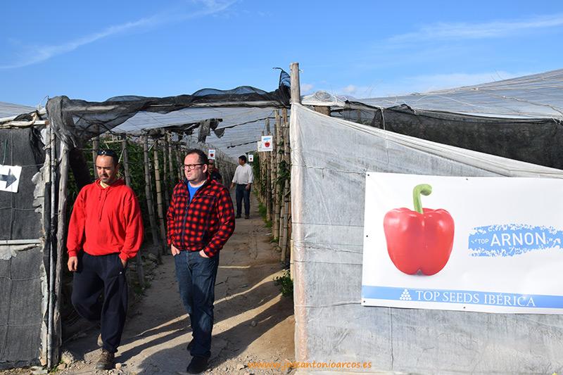Visitando-top-seeds Arnon es un nuevo pimiento california rojo para Almería