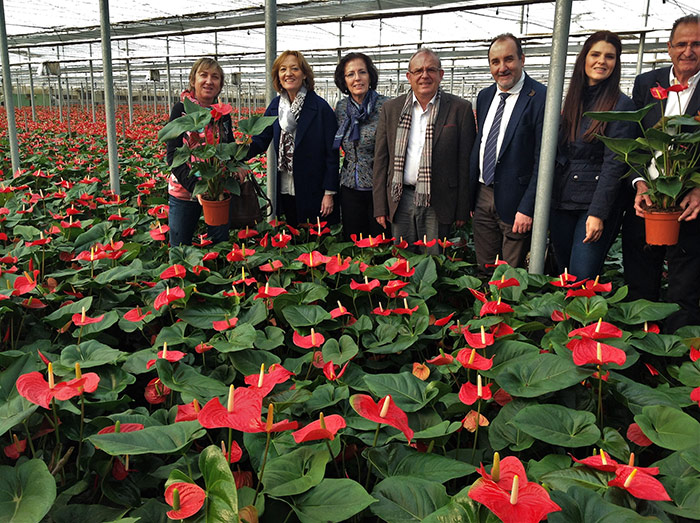 Plantas ornamentales Almería