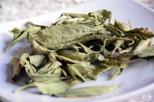 Cultivo de stevia ecologica