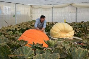 Calabaza gigante en Almeria