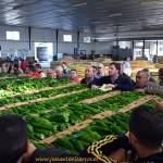 Penetrando en una nueva zona de producción hortícola: Sanlúcar de Barrameda