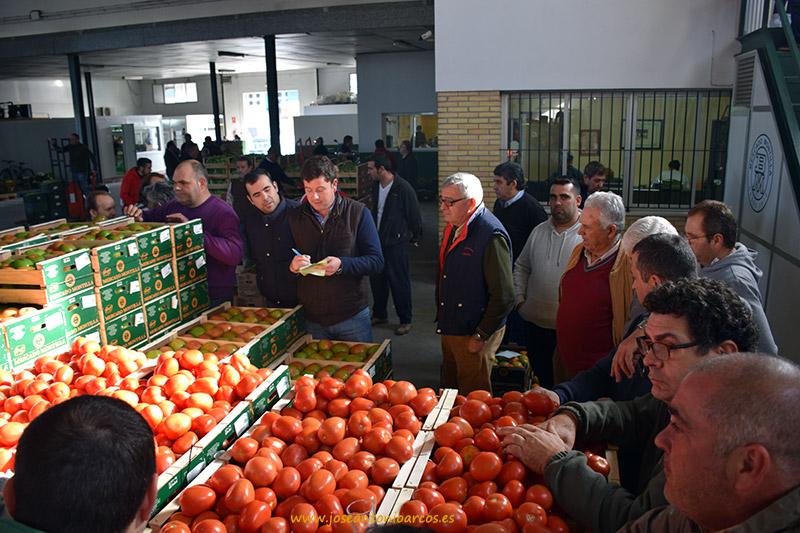 Subasta de tomate pera en la subasta Mercado Montilla en Monte Algaida