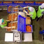 Alimarket sitúa a Única como primera exportadora del país