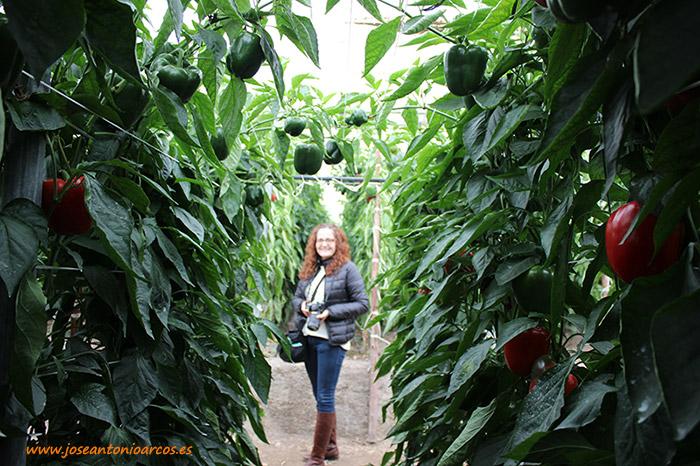 Ana Rubio en un invernadero de pimiento california rojo