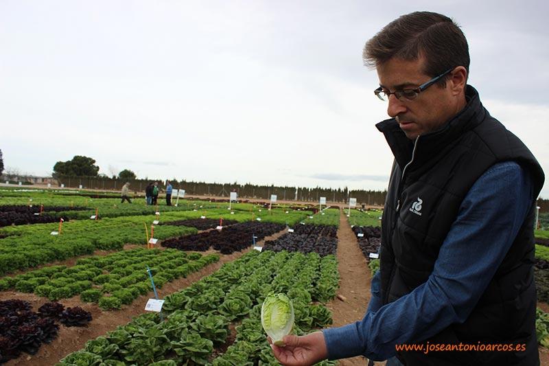 Crop-Specialist-of-Lettuce-en-Rijk-Zwaan-Ibérica