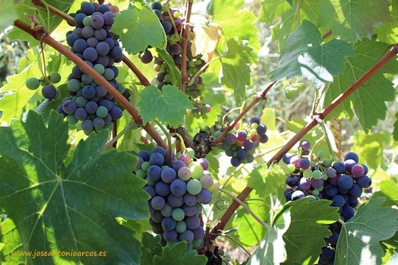 EcoRacimo 2016, Concurso Internacional de Vinos Ecológicos