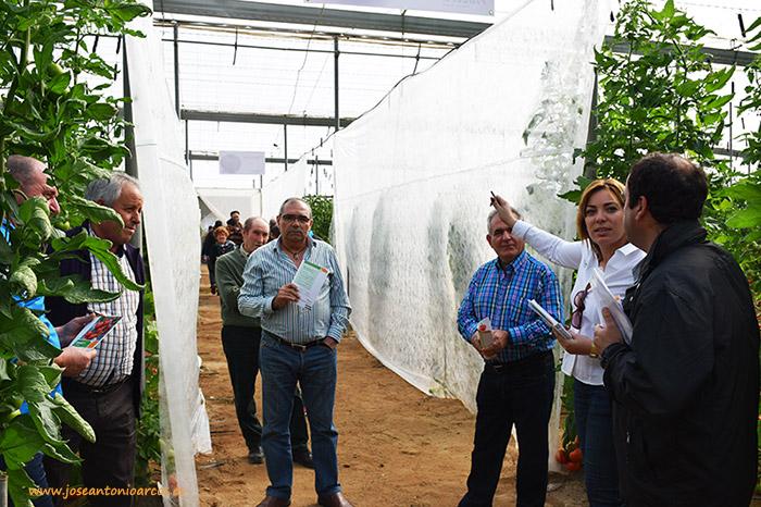 Agricultores de tomate Almeria