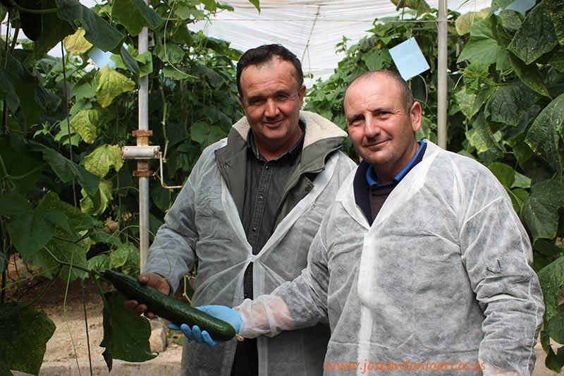 Agricultores de pepino de El Ejido