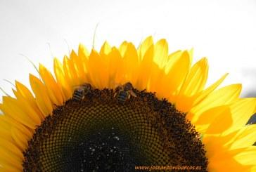 La sequía pone a la apicultura contra las cuerdas