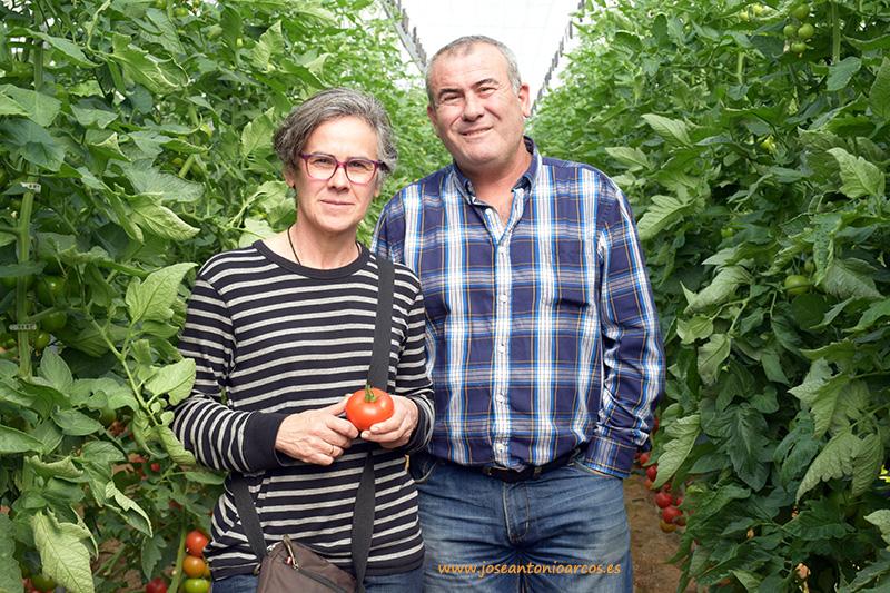 Agricultores visitando los tomates de Hazera