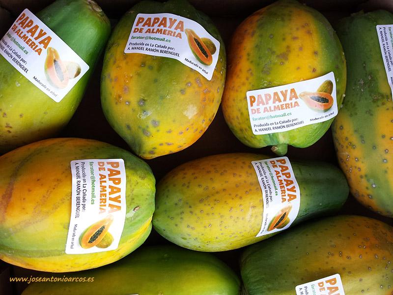 Agricultura en invernadero de papaya