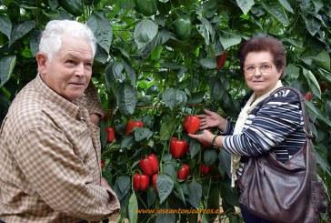 50 años siendo agricultores. Y ahora viendo los tardíos de Zeraim