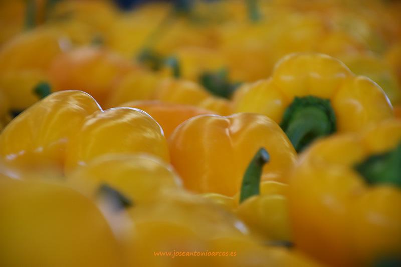 Días 11 y 12 febrero. Jornadas de pimientos amarillos de Enza Zaden