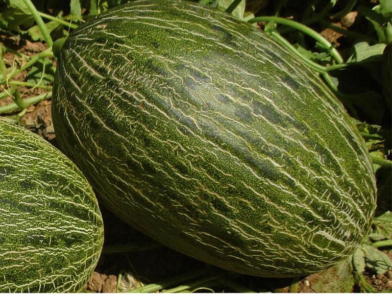melon-VALDIVIESO-HD-1-HM-Clause