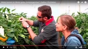 Agricultores de pimiento de El Ejido en una televisión de Alemania