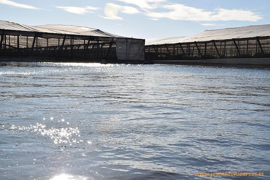 Abaratar el agua desalada: promesa de los partidos ante el 26-J