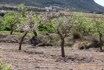 El CSIC advierte a viveros no autorizados sobre el uso de sus variedades