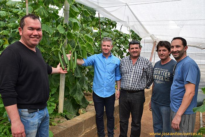 Productores almerienses de pepino, agricultores del Poniente de Almería