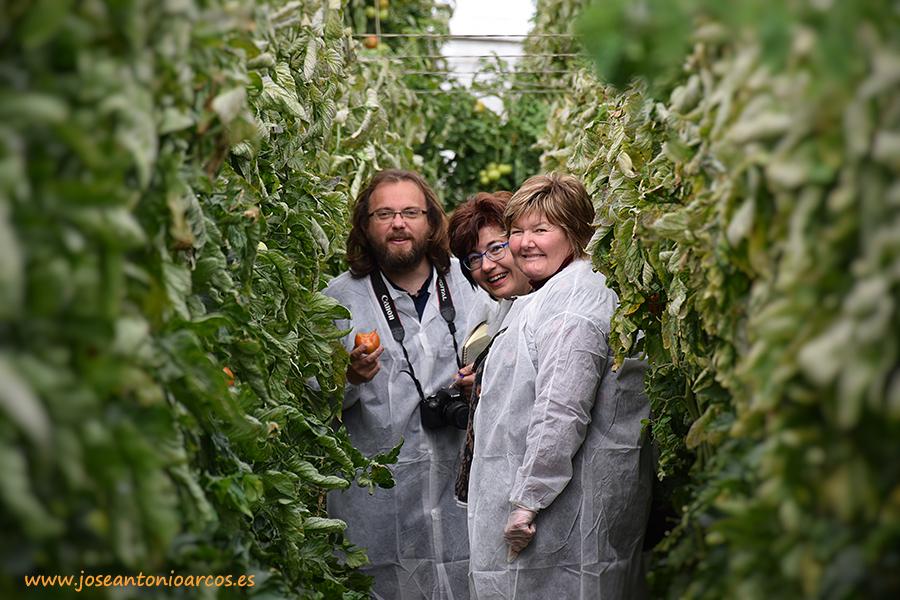 agricultoras de tomate de CASI en un invernadero de La Cañada de Seminis