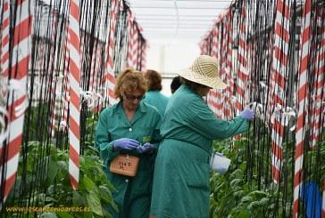 Un sector con más investigadores que comerciales: las semillas