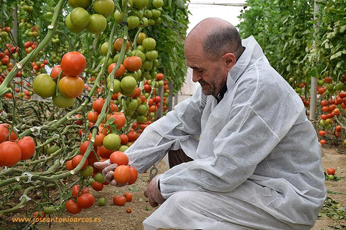 Rogelio López Escudero, agricultor de El Alquián, Almería