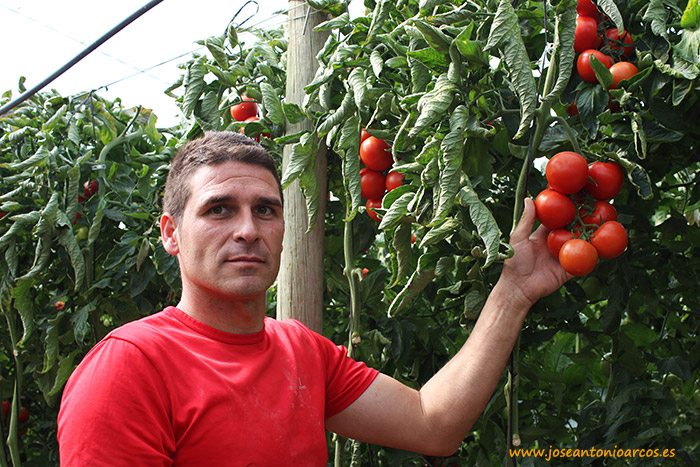 Productor de tomate tipo rama de Aguadulce, Almería