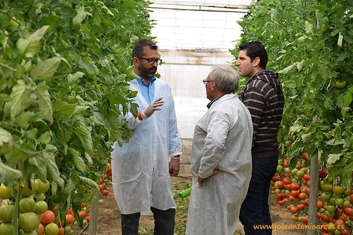 Juan Miguel Robles, comercial de Seminis en Almería y Granada en la jornada de Bateyo en invernaderos de El Alquián
