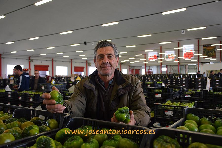 (vídeo) A pie de alhóndiga con un productor de Los Martínez, oasis del tomate