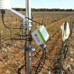 El Big Data llega al sector del vino