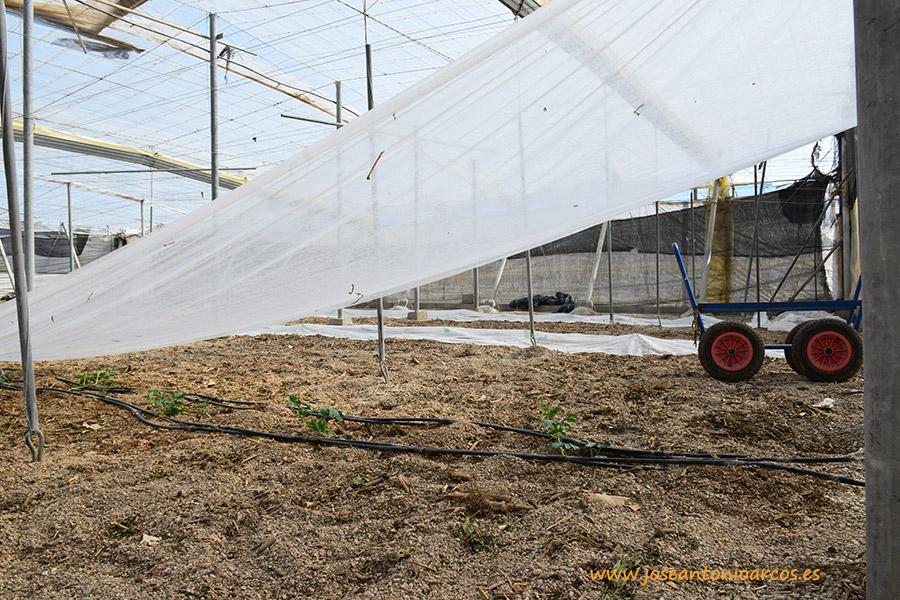 Hacia una fertilización sostenible. Nuevas herramientas para el productor