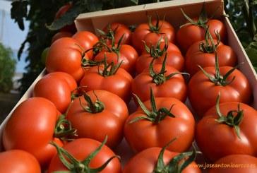 Pésima campaña de tomate en España Francia e Italia