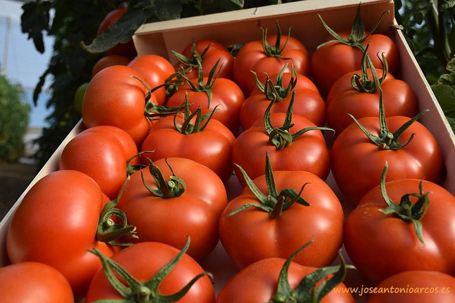 importación y exportación de tomate