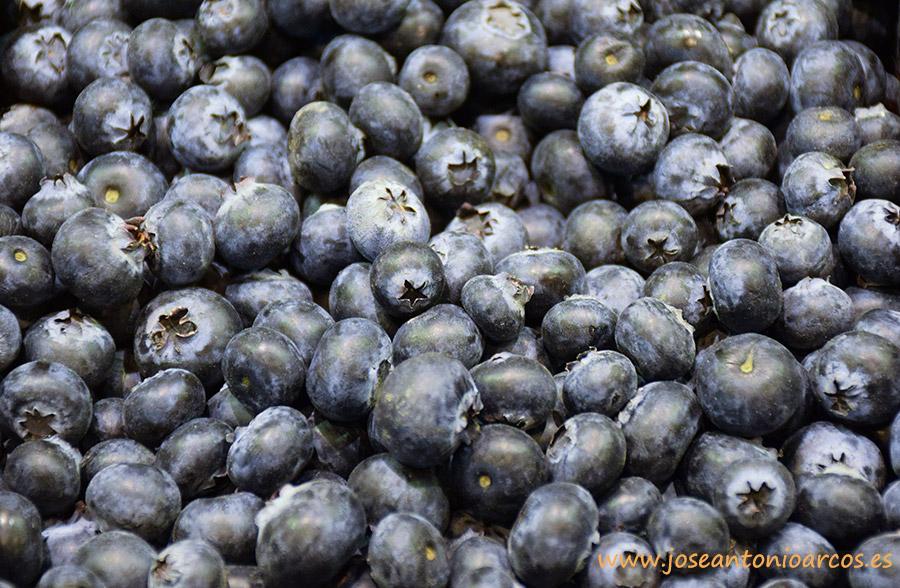 arándanos, berries, frutos rojos, Huelva, Moguer