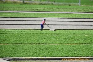 Cultivo-de-berros