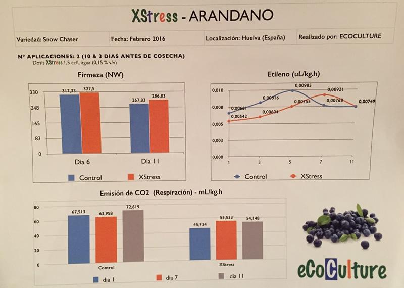 Ecocultura, Huelva, arándanos